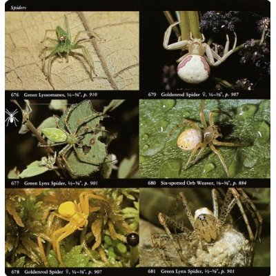Insectfieldguidespiders