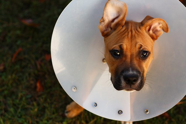 Praise process and not product to keep your child from the cone of shame. Image: Flickr/Aidras
