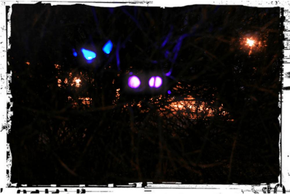 Glowing beastie eyes. Photo by Lisa Kay Tate