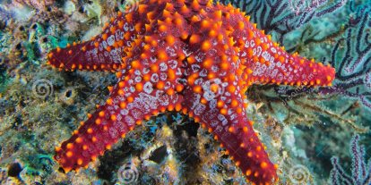 Zombie Starfish: Nature's Undeadliest Catch