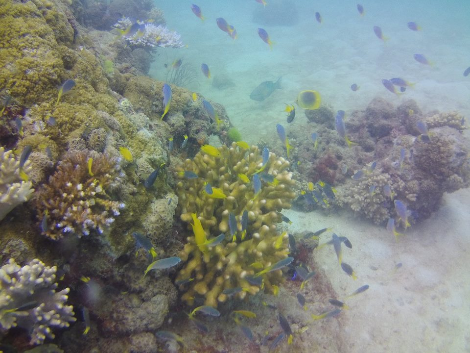 Great Barrier Reef coral