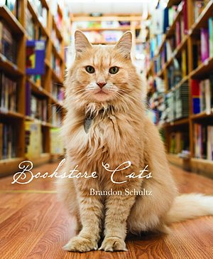 Bookstore Cats, Image: Glitterati Incorporated